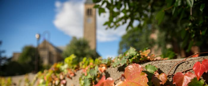 Fall at Cornell